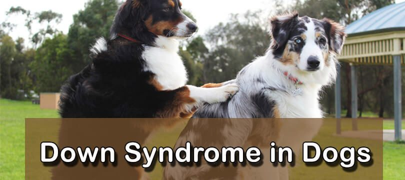 Down Syndrome Dogs