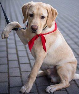 Sport-dog-Temperament