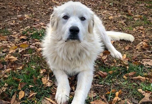 Great Pyrenees complaints number & email